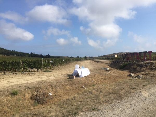 Domaine l'Hospitalet vineyard