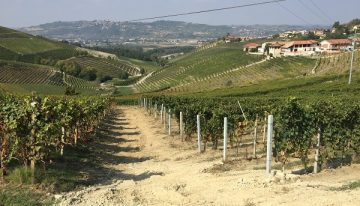Barbaresco: overlooked elegance