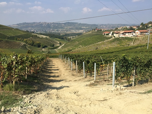 Sandy vineyards