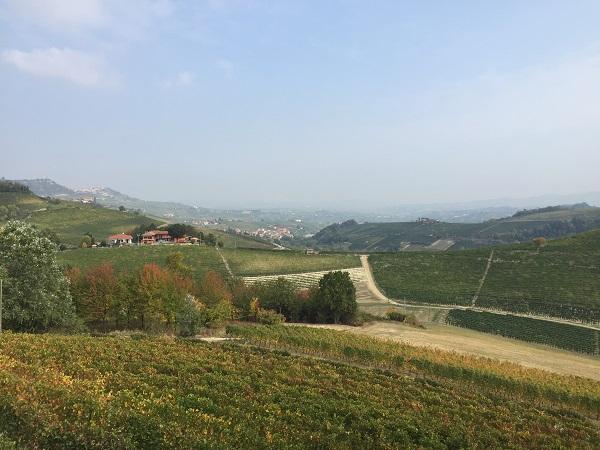 Ravera and Bricco Pernice vines