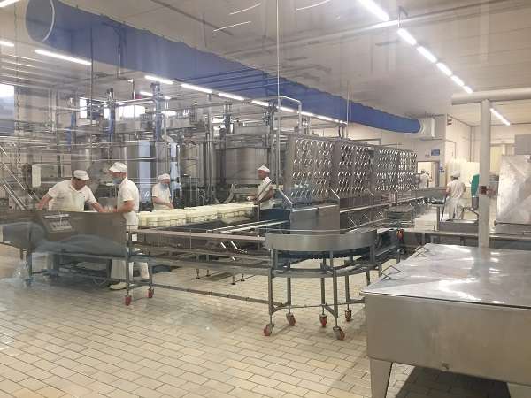 Pecorino Toscano production line