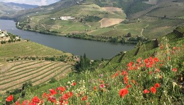 Passing the Port: Douro Boys and classy table wines