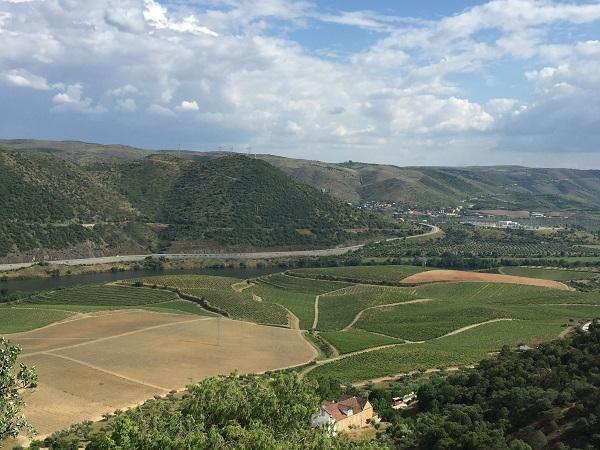 Douro vineyard