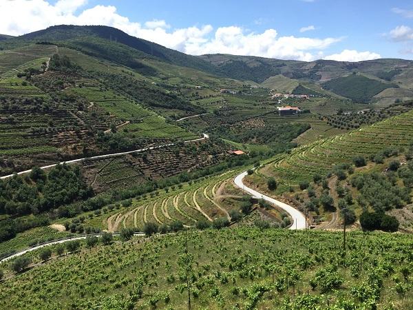 Quinta Vale D. Maria vineyards