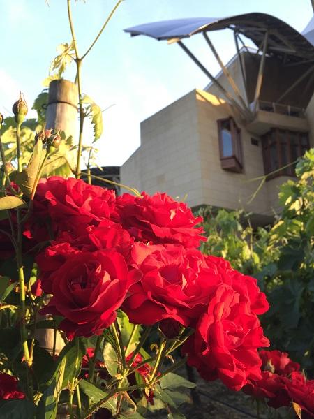 Marqués de Riscal hotel vineyard roses