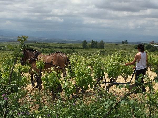Ysios horse ploughing