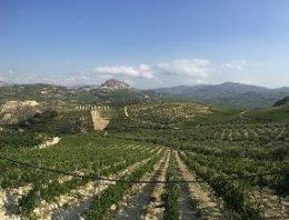 Crete wines: the next Santorini?
