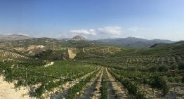 Crete wines: the next Santorini?