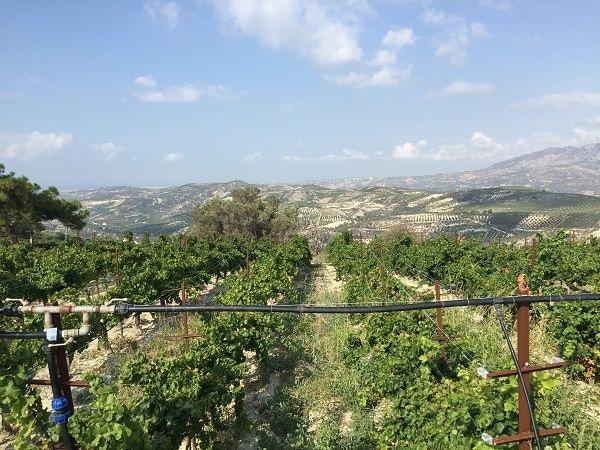 Douloufakis irrigation