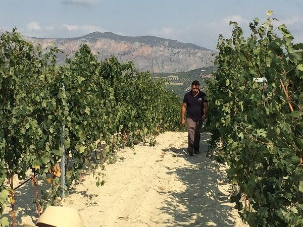 Crete calcareous vineyard