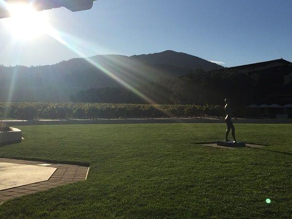 To Kalon vines Robert Mondavi Winery