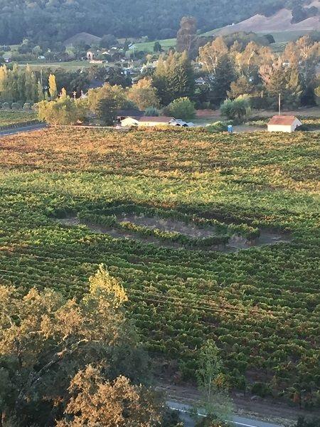 Napa Valley vineyards around water treatment plant