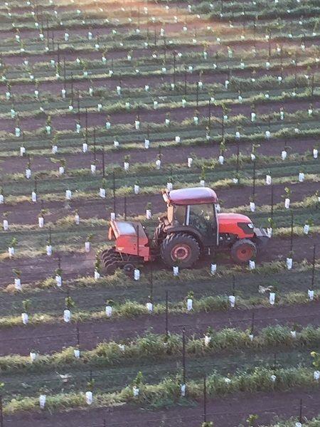 Tractor tilling vines Napa Valley