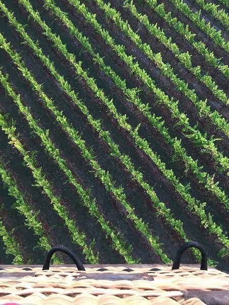 Aerial view of Napa Valley vines