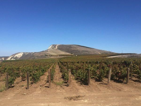 Domaine de la Cote vineyards