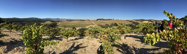 Tablas Creek vineyard panorama
