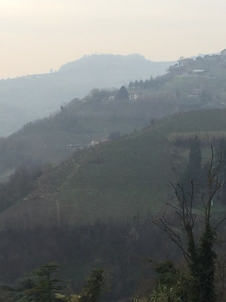 Steep Asti Moscato vineyard inclines