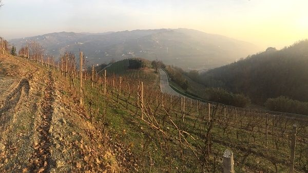 Asti Moscato hillside vineyards